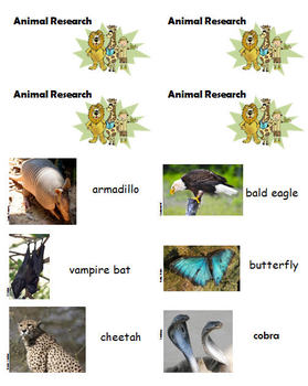Animal Research Foldable Booklet with Task Cards
