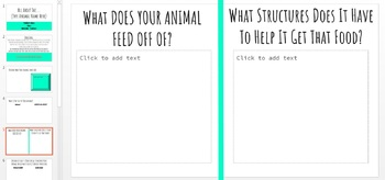 Animal Research Project with Google Slides (Structure, Function, Habitat)