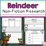 Reindeer Animal Research Report