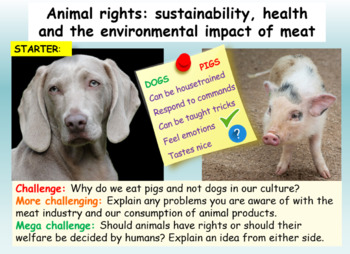 Animal Rights and Sustainability