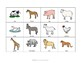 Animal SORTING Vocabulary Activity, SPEECH THERAPY, Autism, Vocabulary