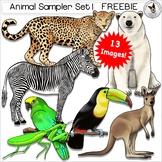 Animal Realistic Clip Art Bird Insect Jaguar Kangaroo Pola