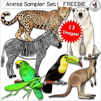 Animal Sampler Clip Art Bird Insect Jaguar Kangaroo Polar