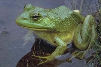 Animal Science-Frogs, Toads, and Salamanders