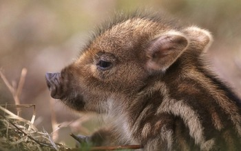 Animal Science -Hoofed Mammals:Wild and Farm Animals