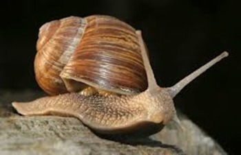 Animal Science-Mollusca (snails, octopi, clams, squid, more)
