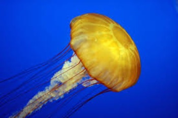Animal Science-Sponges, Jellyfish, and Sand Dollars