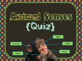 Animal Senses {Quiz}