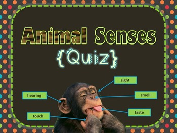 Animal Senses {Quiz}