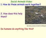 Animal Social Groups - Lesson Plan, Presentation, Videos, Teamwork Activity