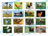 Animal Sort Cards- Farm, Ocean, Jungle, Desert