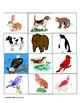 Animal Sort - Land or Air