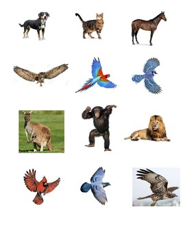Animal Sort, Live on land or in the air