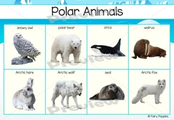 Animal Sort and Classify Activities * NEW*