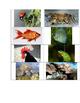 Animal Sort and Writing Activity