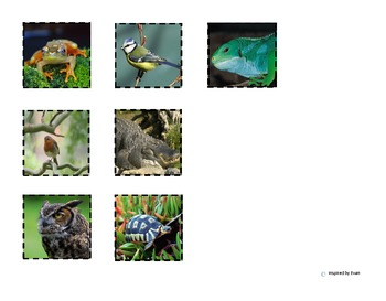 Animal Category Sorting Board for Autism
