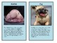 Animal Sorting / Trading Cards