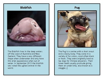 Animal Sorting / Trading Cards