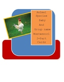 Animal Species  Baby  And  Group Name 3-Part Cards