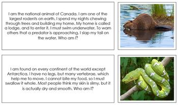 Animal Stories (Set 1) - Montessori