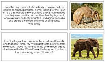 Animal Stories (Set 2) - Montessori