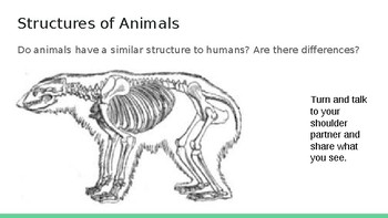 Animal Structure and Adaptations