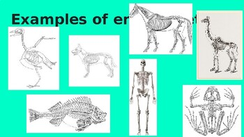 Animal Structures: NGSS 4-LS1-1 and 4-LS1-2