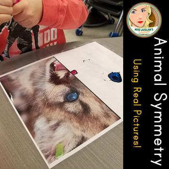 Animal Symmetry using Real Photos