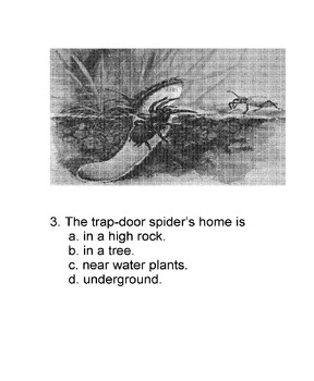 Animal Facts: TRAP-DOOR SPIDER Reading Science w/5 Multiple Choice Comprehension