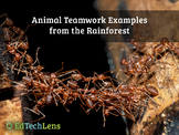 Animal Teamwork Examples from the Rainforest Distance Lear