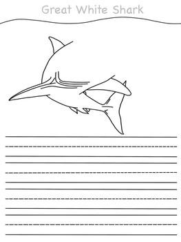 Animal Teeth Writing Activity