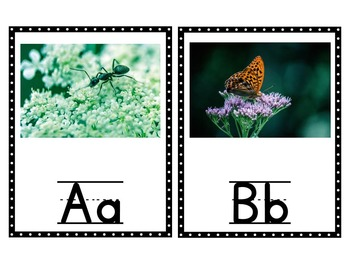 ~ Animal Themed Alphabet Posters and Cards ~
