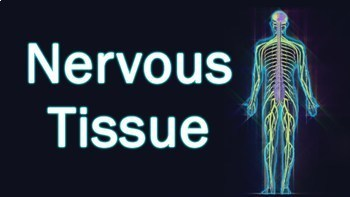 Animal Tissue- Nervous Tissue