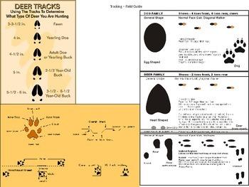 Animal Track Field Guide (Animal Gait Analysis Student track sample)