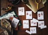 Animal Tracks 3-Part Cards