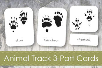 photo about Printable Animal Tracks called Animal Music 3-Portion Nomenclature Playing cards- Montessori