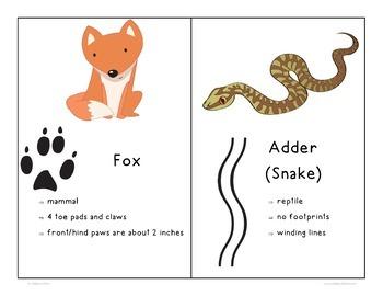 Animal Tracks Activities Set