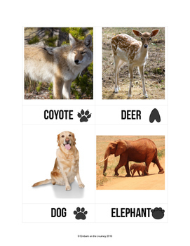 Animal Tracks Activity Pack