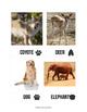 Animal Tracks Activity Pack