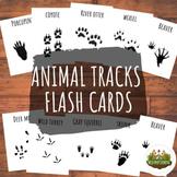 Animal Tracks Flashcards