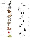 Animal Tracks Matching Sheet for pre-k, kindergarten, 1st, 2nd