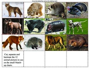 Animal Tracks:  Mini Matching Cards