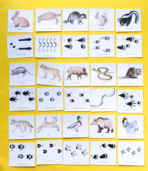 photograph about Animal Matching Game Printable named Animal Songs: Printable Character Memory Matching Match for Youngsters