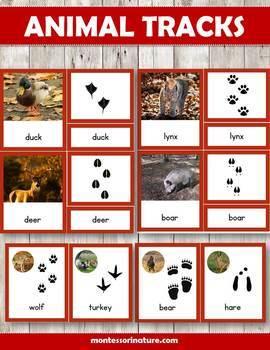 Animal Tracks Three Part Cards