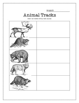 Animal Tracks Worksheet