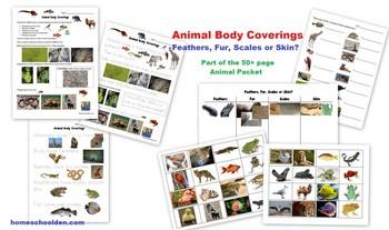 Animal Unit – Vertebrate and Invertebrate Characteristics (and more!)