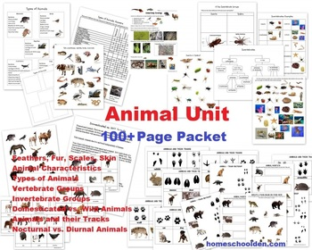 Animal Unit – Vertebrate and Invertebrate Characteristics (and more!)