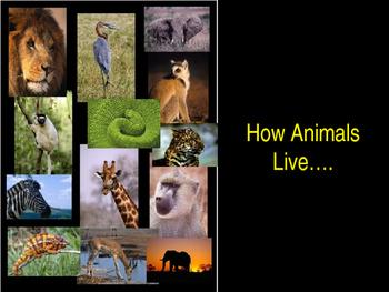 Animal Unit ppt