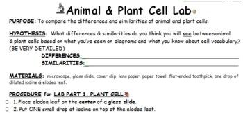 Animal Versus Plant Cell Lab