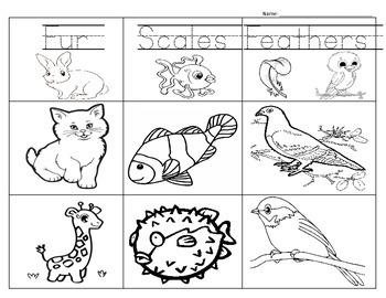Animal Vocabulary Match